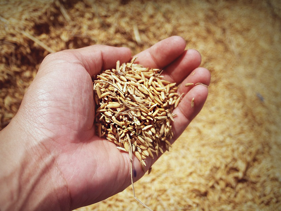 /agriculture/images/content/icon-rice1.jpg