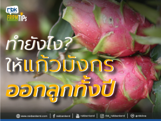https://www.rakbankerd.com/icon/2850-farm-tips_แก้วมังกร1_320x240.jpg
