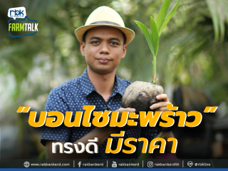 https://www.rakbankerd.com/icon/2858-farm-talk_มะพร้าว_320x240.jpg
