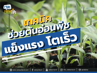 https://www.rakbankerd.com/icon/2871-farm-tips_เนื้อเยื่อ2_320x240.jpg