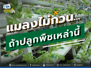 https://www.rakbankerd.com/icon/2874-farm-tips_เกษตรกลางกรุง1_320x240.jpg