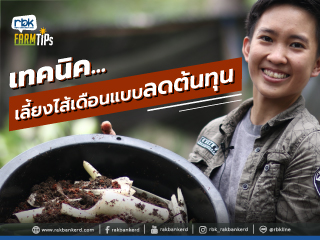 https://www.rakbankerd.com/icon/2875-farm-tips_ไส้เดือน1_320x240.jpg