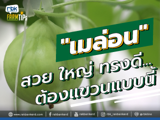 https://www.rakbankerd.com/icon/2878-farm-tips_เกษตรกลางกรุง_320x240.jpg