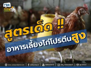 https://www.rakbankerd.com/icon/2886-farm-tips_ไข่ไก่ขบถ1_320x240.jpg