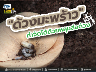 https://www.rakbankerd.com/icon/2943-farm-tips_มะพร้าวน้ำหอม1_320x240.jpg