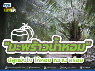 https://www.rakbankerd.com/icon/2944-farm-tips_มะพร้าวน้ำหอม2_320x240.jpg